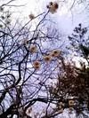 Hana20110323